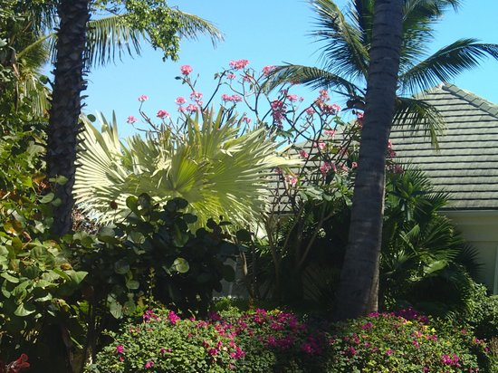 Sands at Grace Bay:                   beautiful landscaping
