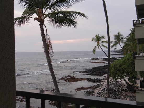 Kona Banyan Tree:                   from the lanai after sunset