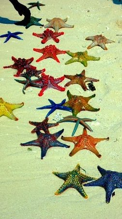 Zanzibar Archipelago, Tanzania:                                     stelle sulla lingua di sabbia Panghe!!