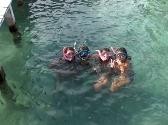 Monkey Tree Casitas: Snorkel in the warm green Caribbean