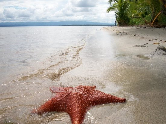 Monkey Tree Casitas: Visit Starfish Beach