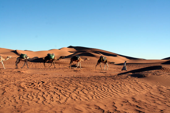 Mhamid Travel 4x4 Day Tours : erg bougarn-DUNES