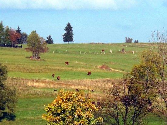 Redyk - Osrodek Uslug Hotelarskich : view from hotel