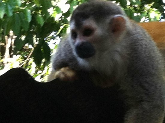 La Posada Private Jungle Bungalows:                   one of the wildlife that visits daily