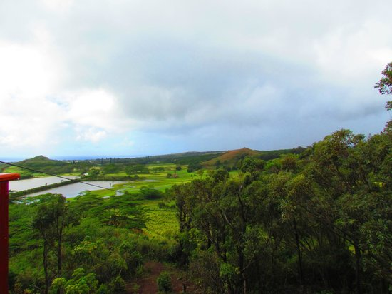 Koloa Zipline:                   beginning of 2000 foot zip