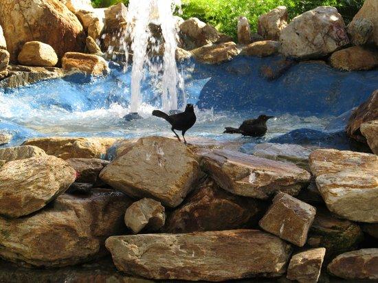 Isla Caribe Beach Hotel:                   Fuente cerca piscina