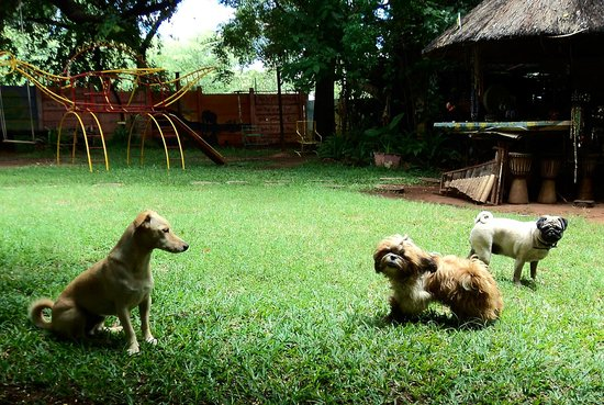 Shoestrings Backpackers Lodge: Furry friends