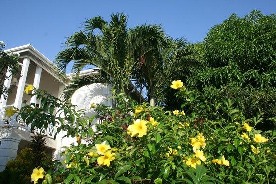 شايدز:                   Lovely Garden                 