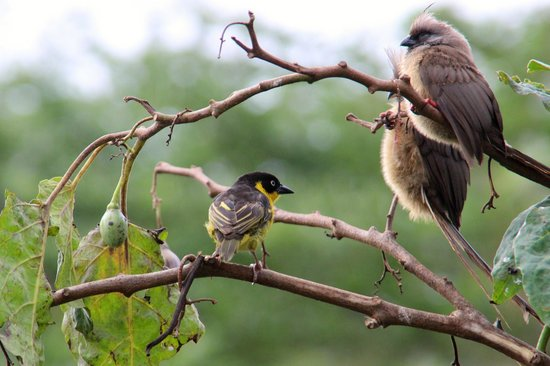 Tloma Mountain Lodge, Tanganyika Wilderness Camps: Lots of birds