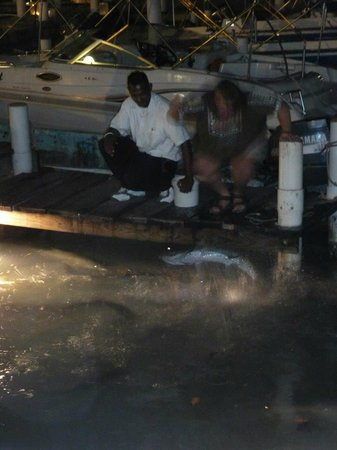 Sunset Grill: Tarpon feeding