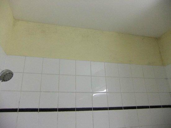TopDomizil Apartments Checkpoint Plaza:                   Bathroom mildew