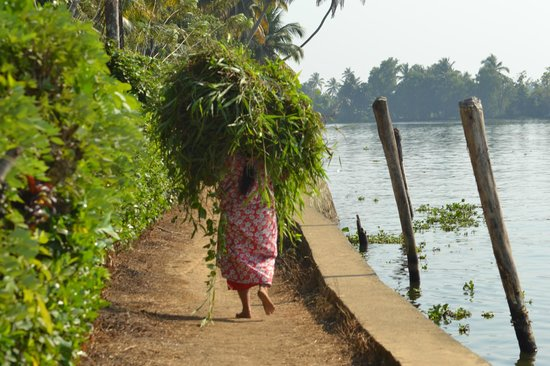Thevercad Alleppey Homestay:                   on the backwaters