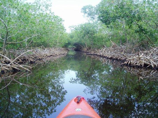 Kayak Utila: Mangrove canal to Rock Harbor