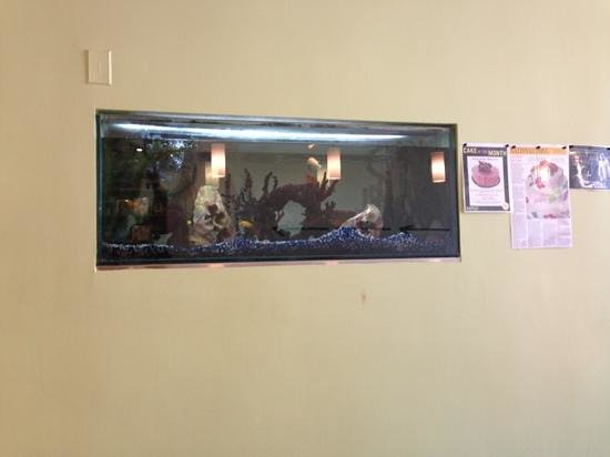 Dufflet Pastries Downtown: fish tank
