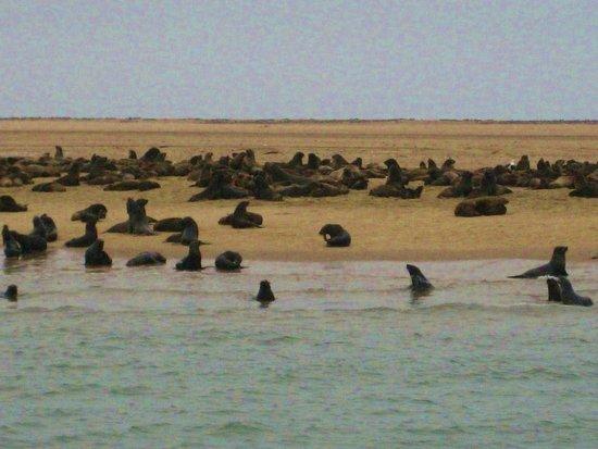 Catamaran Charters: Walvis bay: le otarie lungo la costa