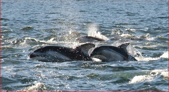 Aboriginal Journeys Wildlife and Adventure Tours: Dolphins
