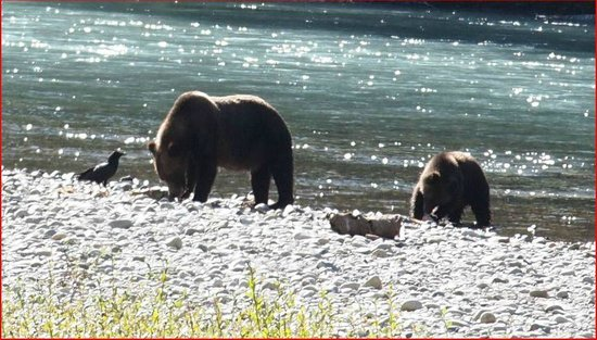 Aboriginal Journeys Wildlife and Adventure Tours: Grizzlys