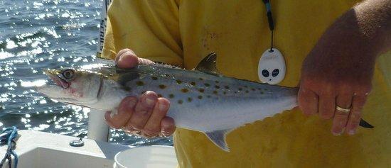 Pirates Pointe Resort:                   Fishing trip. Mackerel.