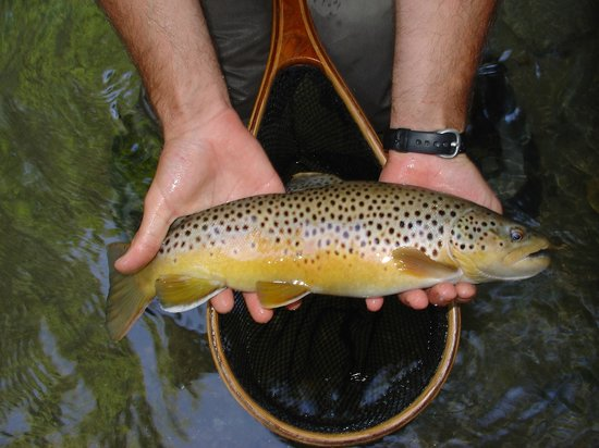 Headwaters Outfitters Outdoor Adventures: Private Trout Waters