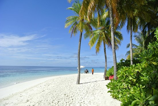Mirihi Island Resort:                   Strand