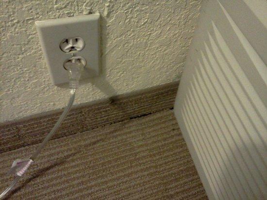 Winston Salem Hotel & Spa:                   Bug by light socket