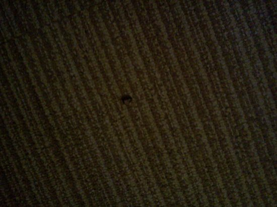 Winston Salem Hotel & Spa:                   Bug on carpet