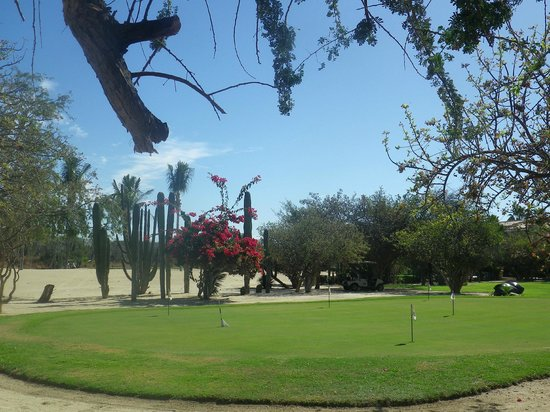 Los Cabos Golf Resort:                                     Grounds in Resort