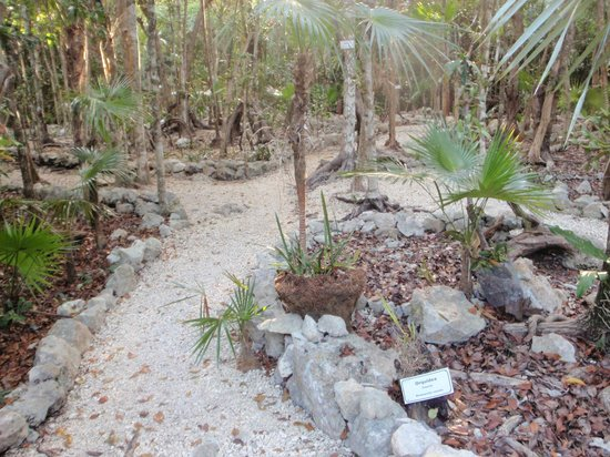 Grand Palladium Colonial Resort & Spa:                                     eco path -?-