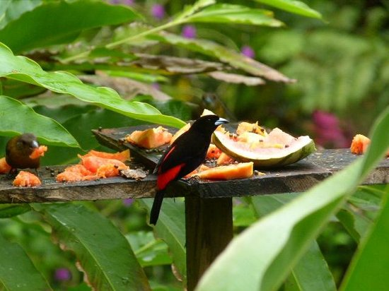 Chachagua Rainforest Hotel & Hacienda: Breakfast companions