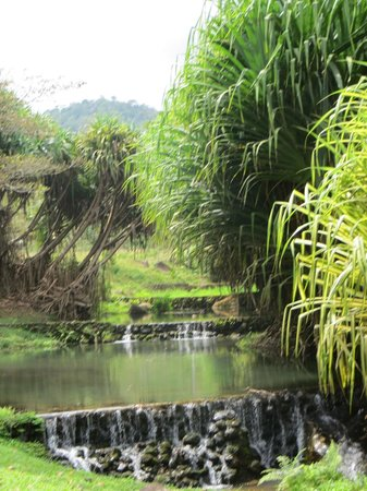 Chachagua Rainforest Hotel & Hacienda: Fish stocked pools
