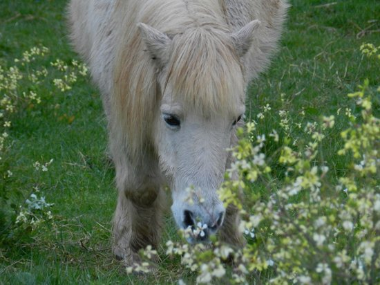 Stony Creek Cottages:                   Resident Pony