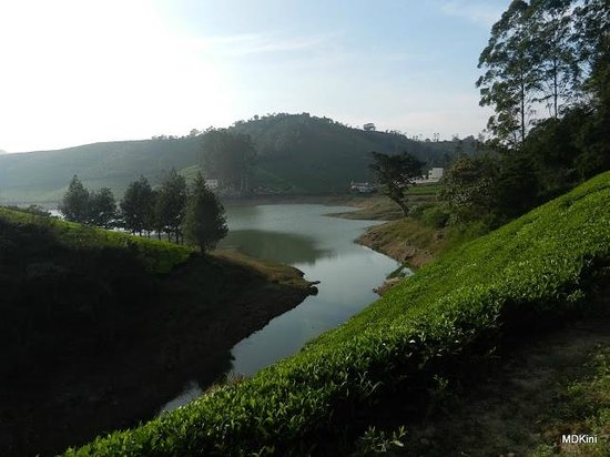 Theni, Indien:                   Meghamalai Lake & tea garden