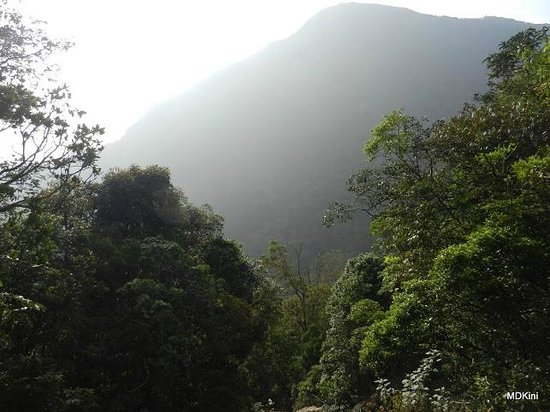 Theni, Indien:                   Meghamalai forests