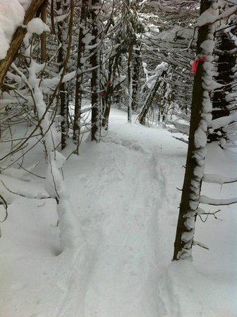 Highlands Nordic:                   Narnia Trail - in the middle of the woods