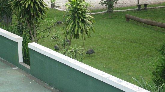 Pousada Chacara Rio Jordao: Aves de corral