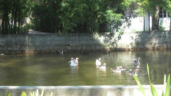 Pousada Chacara Rio Jordao: Laguna con patos