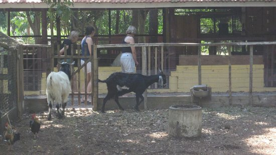 Pousada Chacara Rio Jordao: más animales