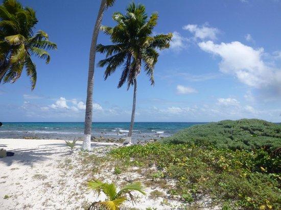 Island Marketing Belize Reviews