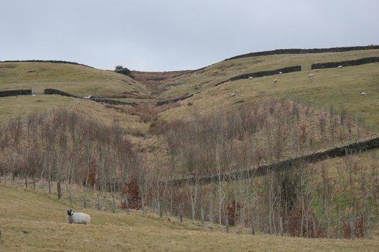 Bondcroft Farm:                   lovely views