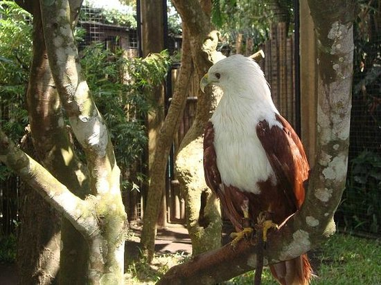 Gianyar, Indonesia: Bird Park 006