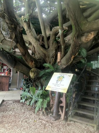 Hotel Tree House Image