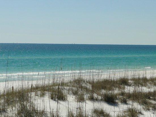 Grayton Beach State Park: Beautiful dunes and gulf