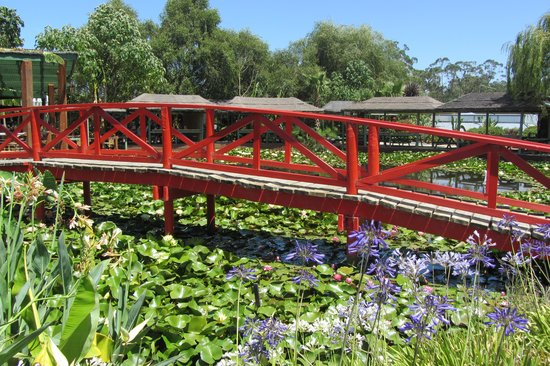 Yarra Junction, Australien: Blue Lotus Water Garden
