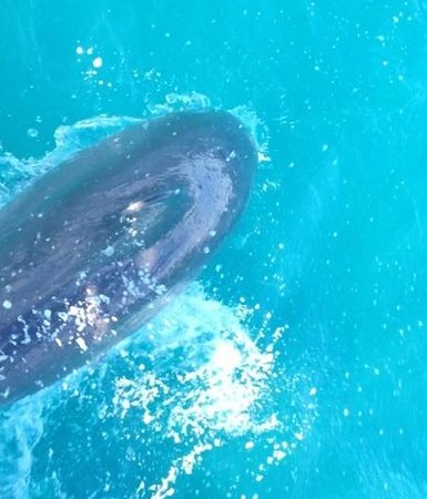 Aleli Tours - Day Tours: dolphin while kayaking