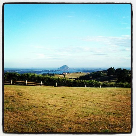 Tauranga Lodge:                   View from the lodge