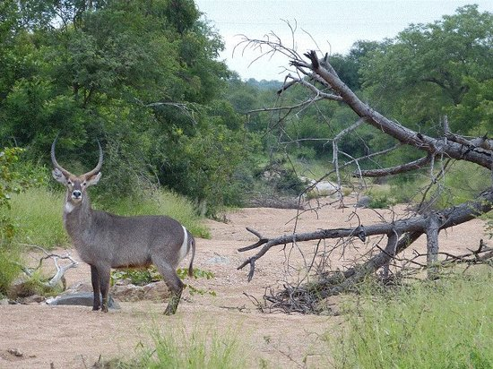 Muweti Bush Lodge:                   Wildlife