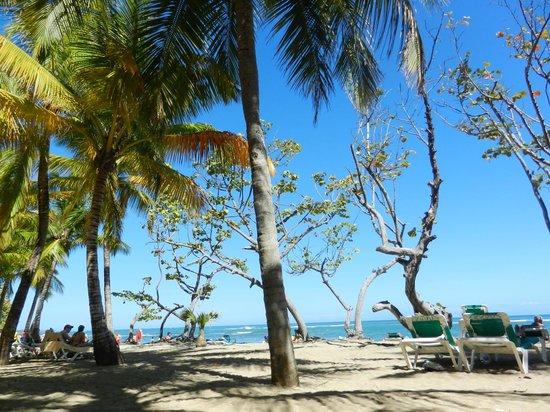 ClubHotel Riu Merengue :                   Beach