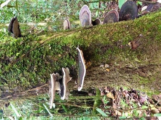 Mossman Gorge Centre Tours: rainforest