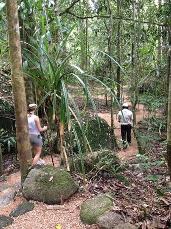 Mossman Gorge Centre Tours: walking trail
