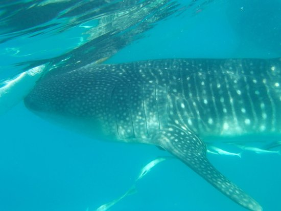 Malonzo Pension House:                   At the Whale Sharks point